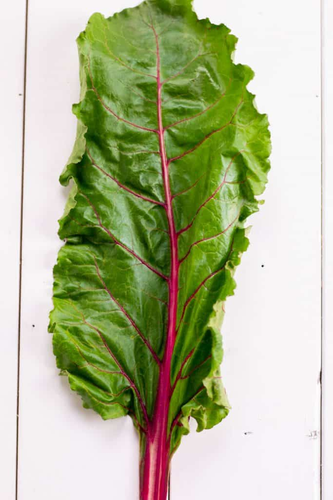 a single piece of red swiss chard
