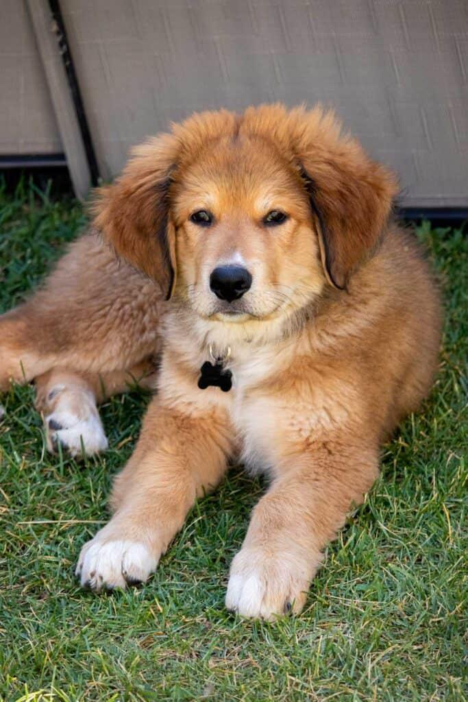 bernie sitting on the grass